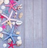 Rozgwiazdy i morza skorupy na drewnianej desce Obrazy Stock
