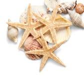 Rozgwiazdy i skorupy odizolowywający na bielu Zdjęcia Royalty Free