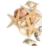 Rozgwiazdy i skorupy odizolowywający na bielu Zdjęcia Stock