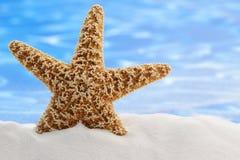 Rozgwiazdy lato zdjęcie stock