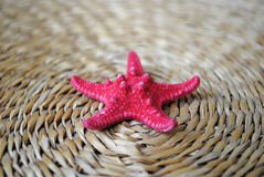 rozgwiazdy matowa czerwona słoma Zdjęcie Royalty Free