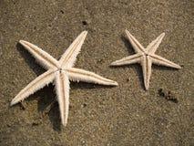 Rozgwiazdy na piasku Obrazy Royalty Free