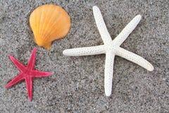 Rozgwiazdy na plażowym piasku Zdjęcie Stock