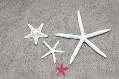 Rozgwiazdy na plażowym piasku Obraz Royalty Free