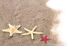 Rozgwiazdy na plażowym piasku Obrazy Stock