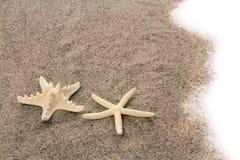Rozgwiazdy na plażowym piasku Fotografia Royalty Free