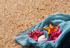 Rozgwiazdy na plaży Fotografia Royalty Free