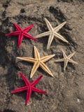 Rozgwiazdy na skale Zdjęcia Royalty Free