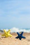 Rozgwiazdy przy plażą Zdjęcia Stock