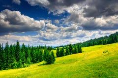 Rozjaśniać z footpath w lesie na halnych skłonach po a Fotografia Stock