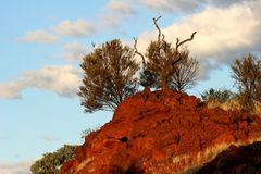 Rozjarzona czerwieni skały twarz i krzak Fotografia Royalty Free