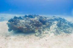 Rozjarzona koralowa życie skała Obraz Royalty Free