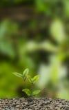 rozjarzona roślina Obraz Royalty Free
