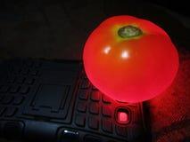 Rozjarzony czerwony pomidor na androidu telefonu ` s błysku świetle zdjęcie royalty free