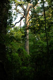 rozjarzony drzewo Obrazy Stock