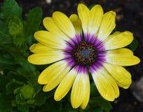Rozjarzony kwiat Obrazy Stock