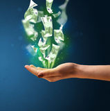 Rozjarzony pieniądze w ręce kobieta Zdjęcie Royalty Free