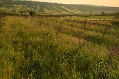Rozległy wiejski krajobraz zdjęcie royalty free