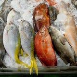 Rozmaitość świeżej ryba owoce morza w targowym zbliżenia tle Fotografia Stock