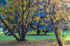 Rozmaitość kolory roślinność w parku Zdjęcia Royalty Free