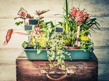 Rozmaitość rośliny w garnkach z ogrodowymi narzędziami dla lato zbiornika ogrodnictwa Obrazy Royalty Free
