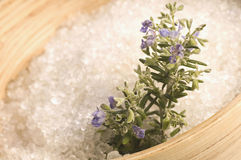 rozmarynów soli w wannie glinu Obrazy Royalty Free