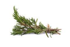 rozmarynowi ziele i Leczniczy ziele Organicznie leczniczy ziele świeży Fotografia Royalty Free
