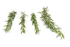rozmarynowi ziele i Leczniczy ziele Organicznie leczniczy ziele świeży Obrazy Stock