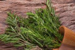 rozmarynowi ziele i Leczniczy ziele Organicznie leczniczy ziele świeży Zdjęcie Stock