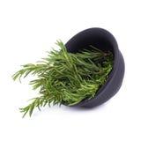 rozmarynowi ziele i Leczniczy ziele Organicznie leczniczy ziele świeży Obrazy Royalty Free