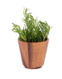 rozmarynowi ziele i Leczniczy ziele Organicznie leczniczy ziele świeży Zdjęcia Stock