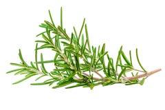 Rozmarynowy organicznie ziele odizolowywający na białym tle, makro- fotografia royalty free