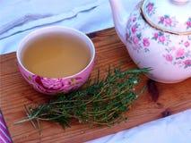Rozmaryny i tymiankowa zielarska herbata na stole Obraz Royalty Free