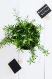 Rozmaryny w plantatorze na białej deski tle Fotografia Royalty Free