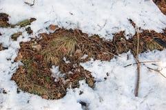 Rozmarznięte łaty w śniegu fotografia stock