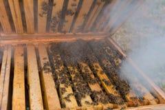 Rozmiar pszczoły kolonia po zimy Obrazy Royalty Free