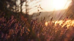 Rozmyta dzika łąka kwitnie na ranku świetle słonecznym Obraz Royalty Free