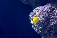 Rozmyta fotografia różna siedząca woda łowi w dennym akwarium obrazy royalty free