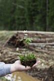 rozmyta tło roślina Obrazy Stock