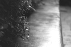 Rozmytej marzycielskiej krzak gałąź świezi mali drzewni liście z tłem kamienny siedzący ławki siedzenie w sztuka jardzie uprawiaj obrazy stock
