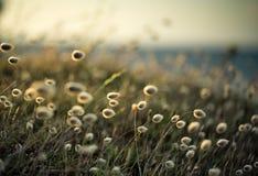 Rozmyty tło z Plażową trawą obraz stock