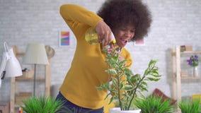Rozochocona i pozytywna Piękna amerykanin afrykańskiego pochodzenia kobieta z afro fryzurą bierze opiekę kwiaty i rośliny w nowoż zdjęcie wideo