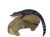Rozochocony uśmiechnięty aligator na szarym kamieniu Odizolowywający na bielu Obrazy Royalty Free