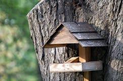 Rozpieczętowany birdhouse wspinający się na drzewie Fotografia Royalty Free