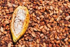 Rozpieczętowany dojrzały kakaowy strąk na suszyć surowego fasoli tło Obraz Stock