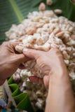 rozpieczętowany surowy świeży kakaowy strąk w rękach z fasolami inside Obraz Stock