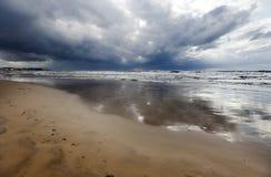 Zwierzęcy ślada na Mokrej zimy plaży Zdjęcie Royalty Free