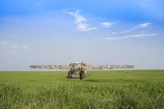 Rozpylać pszenicznego pole Obraz Royalty Free