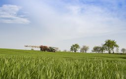 Rozpylać pszenicznego pole Fotografia Stock