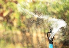 Rozpylająca woda od kropidła Fotografia Royalty Free